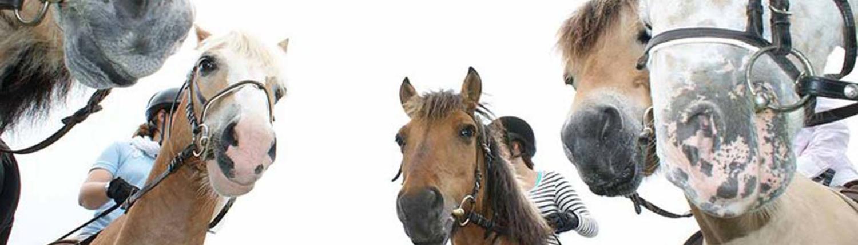 Freizeitreiten Hopp - Pferde