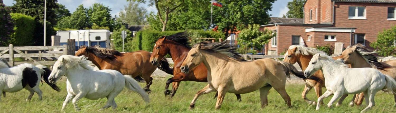 Freizeitreiten Hopp - Pferde im Galopp